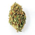 Amnesia Haze Strain - Cannabis Dispensary